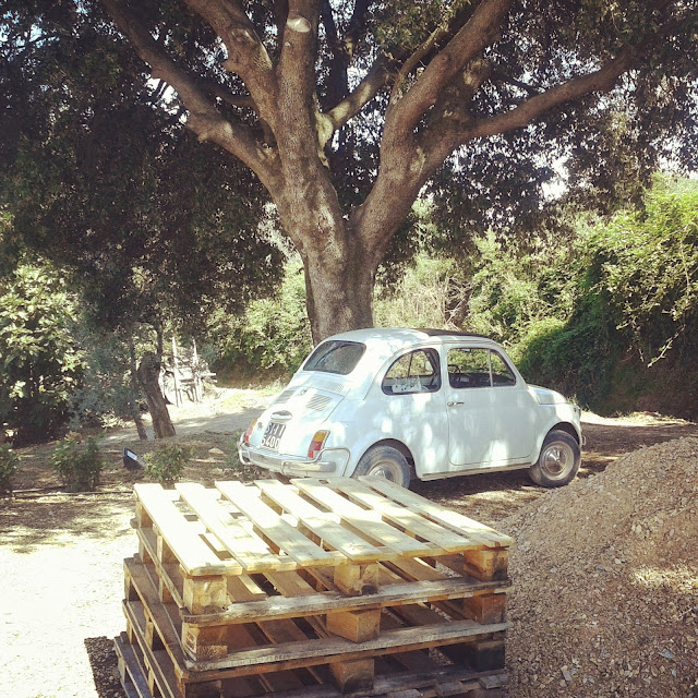 An old Fiat 500 parked under an oak tree at a Montalcino winery