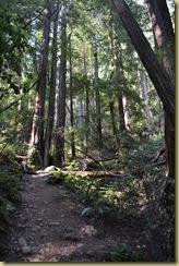 Muir Woods Hillside Trail