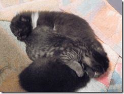 kittens 1 week 02