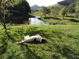 Dogs Trekking 4 (77_1) (6)