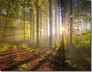 forest-sunlight-thumb
