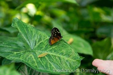 Callaway Gardens butterfly garden blog-11