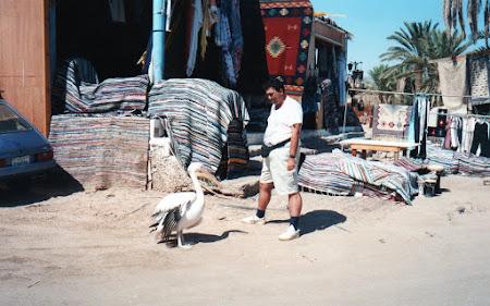 Imagini Sinai: cu Samira in Nuweiba