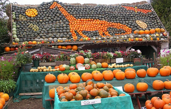 slindon west sussex pumking gourd squash display 6