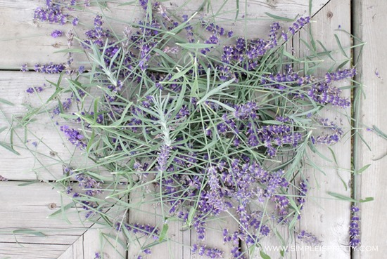 Dead Lavender Blooms from www.simpleispretty.com