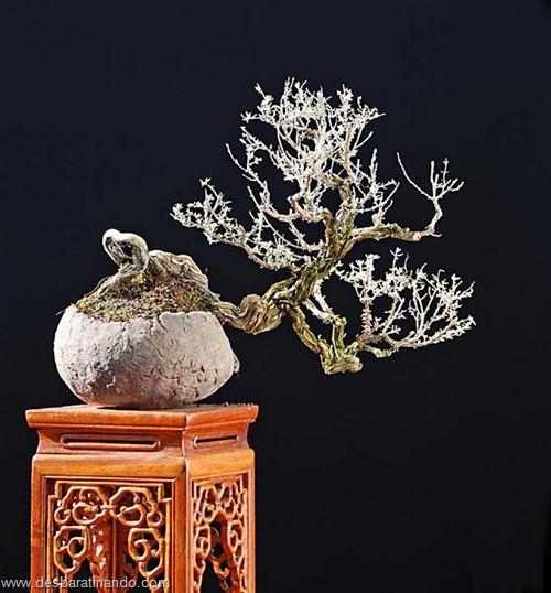 bonsais arvores em miniatura desbaratinando (60)