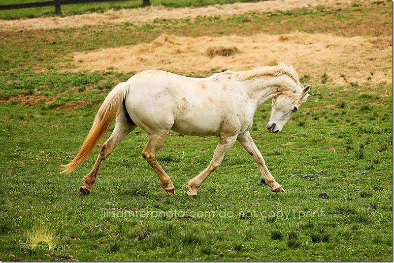 horses-5502
