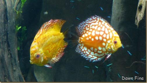 Atlanta Aquarium_059