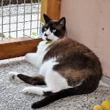 gatti 2012/1