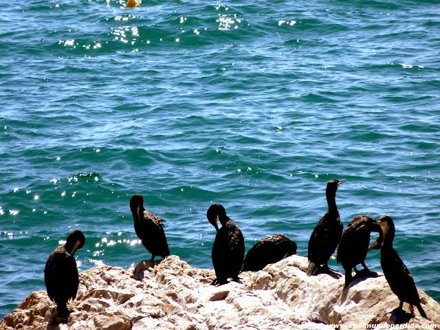 reserva-marina-aves.JPG