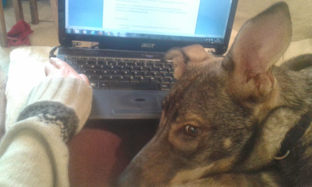 Dog on laptop - writing