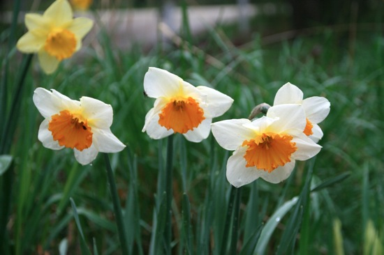 Daffs3