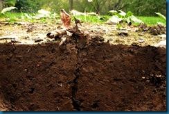 debris into burrow