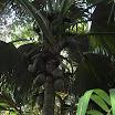 seychelles2_20070412_1942719226.jpg