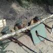 Chojnowo017.jpg