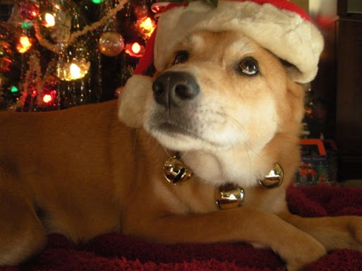Barb B. says Griffin is patiently waiting for Santa!