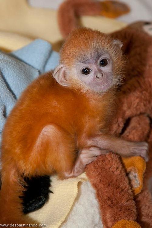 filhotes recem nascidos zoo zoologico desbaratinando animais lindos fofos  (36)
