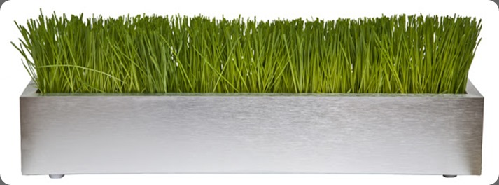 grass WHEAT GRASS IN BRUSHED ALUMINUM TROUGH 24 IMG_9868_24_LowRes floral art
