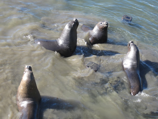 Sea lions can always be found playing around or sleeping near the main dock.