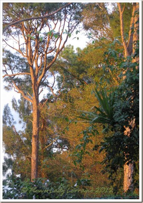 12-17-sunset-on-pines