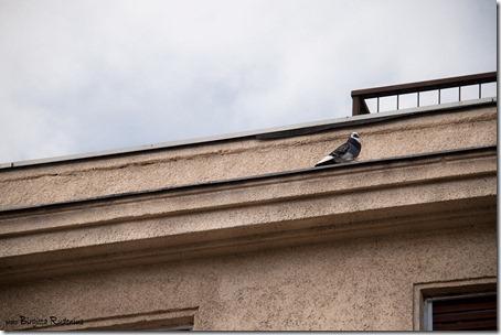 house_20121130_dove