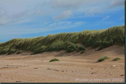 16-dunes