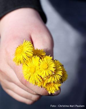 Barnehender og blomster-001