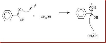 esterification of methyl benzoate from benzoic acid The fischer esterification is used to prepare methyl benzoate from benzoic acid and methanol with sulfuric acid catalyst in 764% yield a soxhlet.