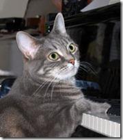 gato pianista blogdeimagenes (23)