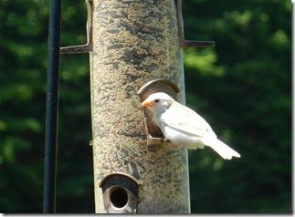White bird 022