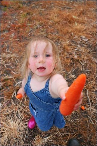 gb carrot