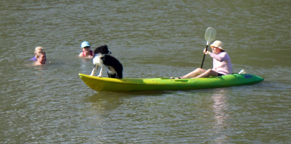 Dog on Canoe, College's Creek