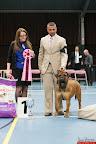 20130511-BMCN-Bullmastiff-Championship-Clubmatch-2531.jpg