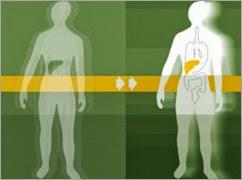 300x222xLiver-transplant-300x222_jpg_pagespeed_ic_S_L2R3bnlZ