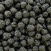 WS1111 Blackberries.jpg