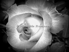 White Flower (9)