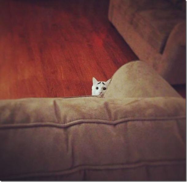 white-cat-eyebrows-16