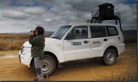 Vigilante de la laguna en el observatorio de La Reguera, Las Cuerlas (E. Viñuales)