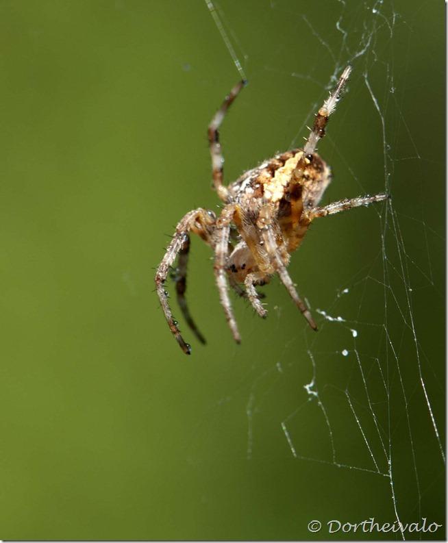 peteredderkop