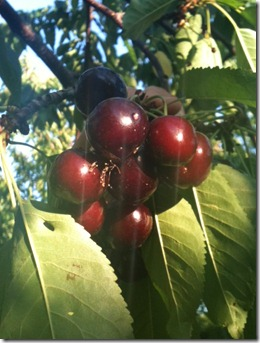 mmm cherries
