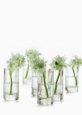 Clear Glass Cylinder, Set of 4. (jamaligarden.com)