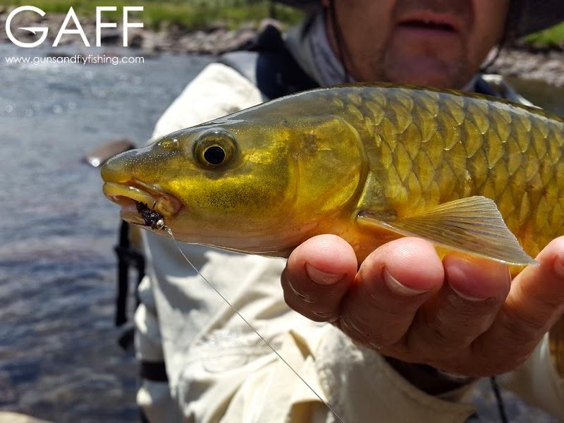 lesotho-yellowfish-flyfishing-trout (8).jpg