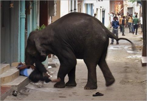 India Elephant Rampage 02