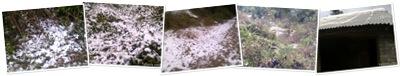 View Talwara Snowfall
