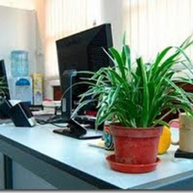 ضع على مكتبك  نبات اخضر ليحميك من الصداع والاجهاد