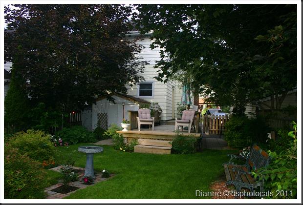 IMG_4365 Backyard