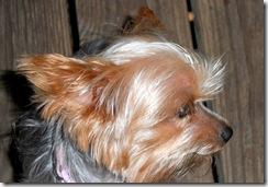 Maddie-3-Nov.2011