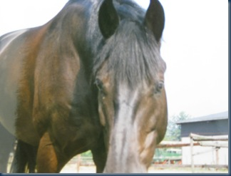 pferde 002