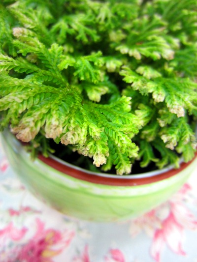 moss | Ideas in Bloom