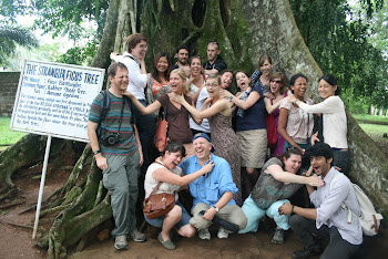'Strangler Ficus Tree strangles the class at Aburi Botanical Garden.' Photo by Sandra Vu